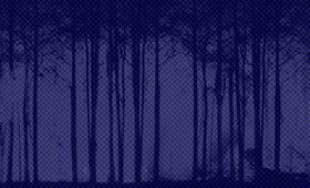 Продавали лес в Китай. Пять уголовных дел возбуждено в Хабаровске